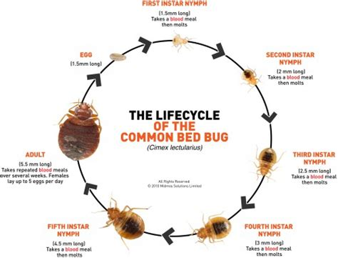 bed bugs life cycle demodex mites herbal products hair mites hair loss