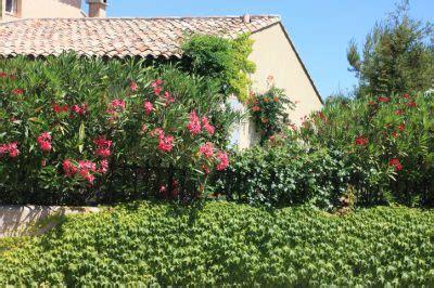 Oleander 187 An Diesem Standort Gedeiht Er Am Besten