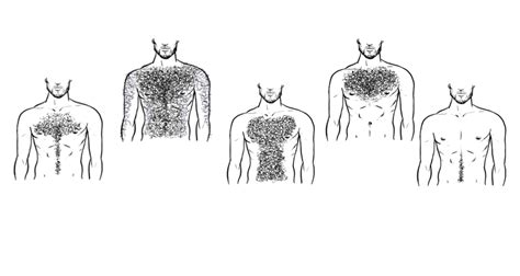 pictures of mens chest hair patterns top five chest hair styles coach