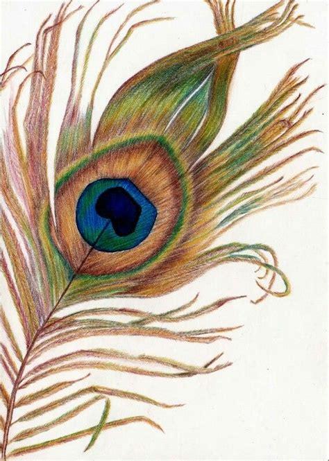 color sketch peacock feather in color pencil drawings color pencil