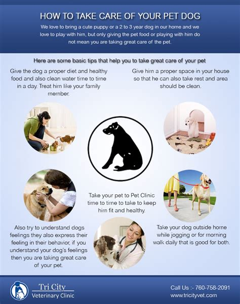 taking care of a puppy how to take care of your pet visual ly