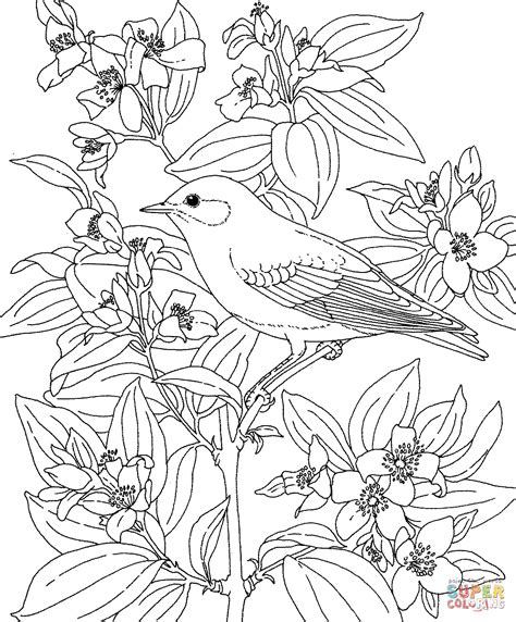 coloring pages of state birds and flowers mountain bluebird and lewis s mock orange idaho bird and
