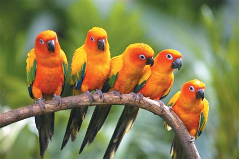 more than half of bird species under threat in us report
