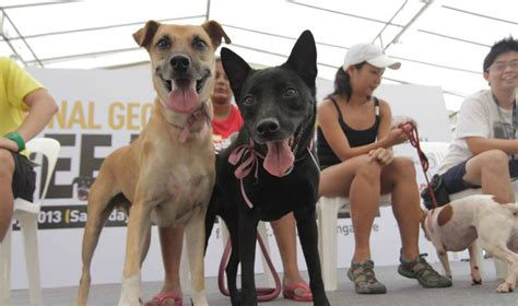 7 Great Animal Charities by Animal Charities Where To Volunteer To Help Animals In