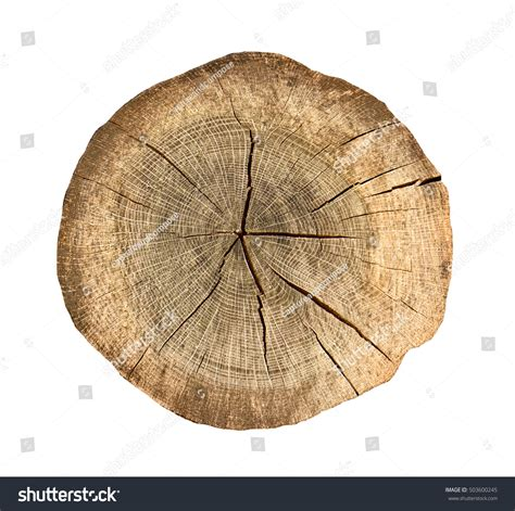 cross section cut aged weathered cross section cut wood stock photo