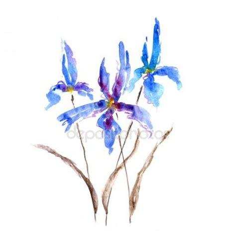 fiore di iris fiore di iris acquerello foto stock 169 shat88 107418688