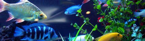 aquarium design services fargo east coast aquarium designs fish tank installation