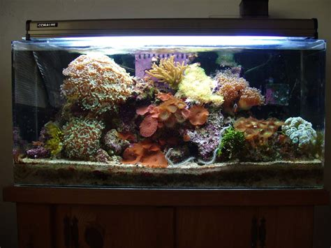 setup your beutifuly saltwater aquarium your pets healthy