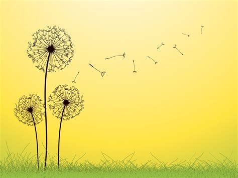 Dandelion Backgrounds Wallpaper Cave Nature Powerpoint Background