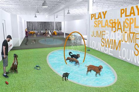 torontos  upscale dog resort opens  wagging reviews