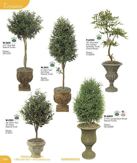 tree topiary various topiaries bonsai shrub plant types shapes