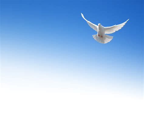 We Our Dove Ultimate Winners by Why Does The Dove Represent The Holy Spirit The Best