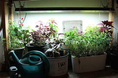 plants that grow in fluorescent light 100 plants that grow in fluorescent light plant