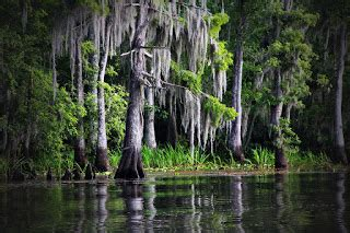 airboat rides in new orleans airboat tours new orleans tourists have to see to believe
