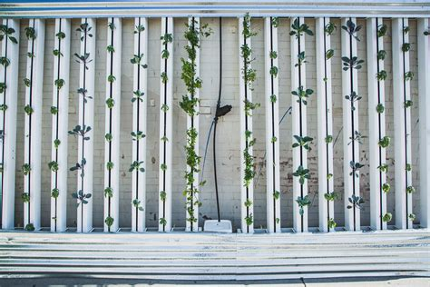 what you need to build your own vertical garden simple