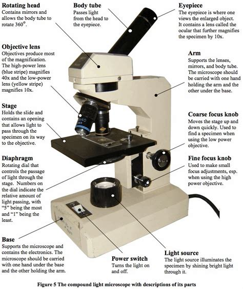 compound light microscope parts and functions light microscopy clipart labeled function pencil and in