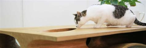 cat table constantly satisfying a cat s curiosity catable by ruan hao freshome