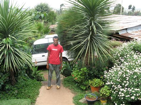 Description Of A Beautiful Garden File Beautiful Garden In Addis Ababa Fertilised With