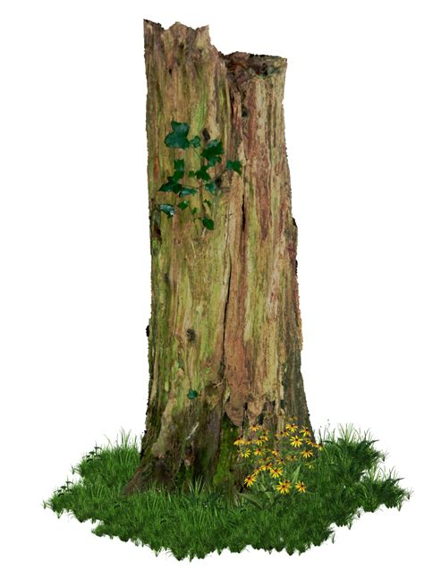 tree stump rotten tree stump png by alz stock and