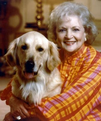 betty white golden retriever 17 best images about betty white pets on animal organizations yorkie and