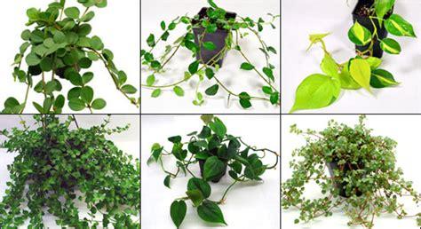 neherp vivarium gecko plant kits