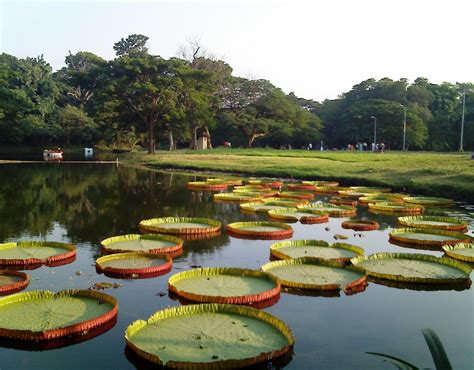 Botanical Garden Kolkata Dhaka V S Kolkata Page 13