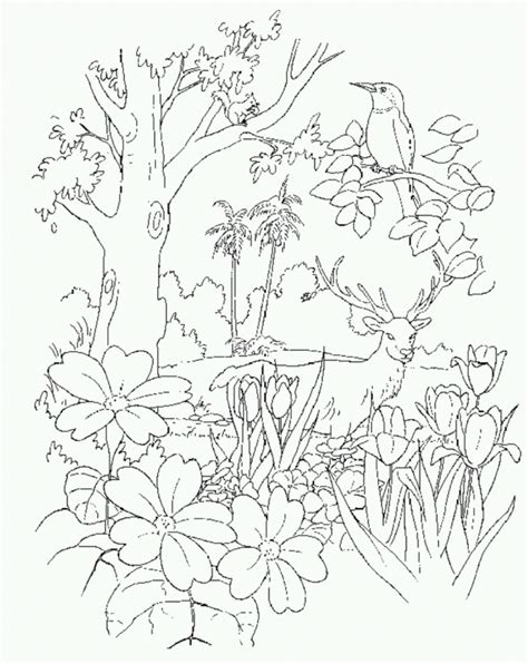 adam   garden  eden coloring pages printable