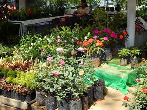 garten zu hause images of sri lanka on flowers in the home