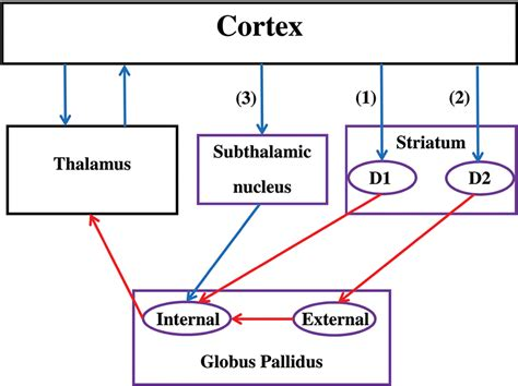 central pattern generator review frontiers exploring the cognitive and motor functions of