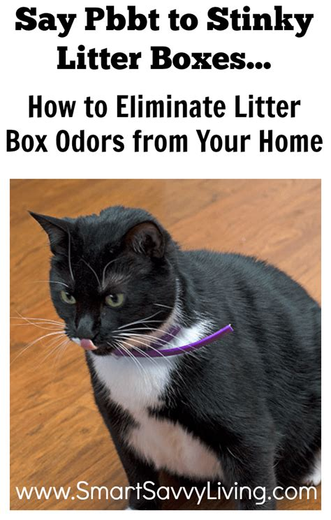 how to litter your how to eliminate litter box odors from your home