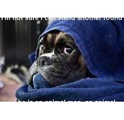 Quotes Or Sayings Cute Boxer Dogs QuotesGram