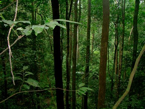 plants found in tropical evergreen forest tropical evergreen forest a snap from the evergreen