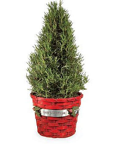 fragrant christmas tree flowers gifts and decor