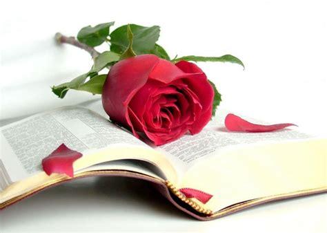 libro tierras rojas red carpa para sant jordi con la rosa y el libro bc carpas