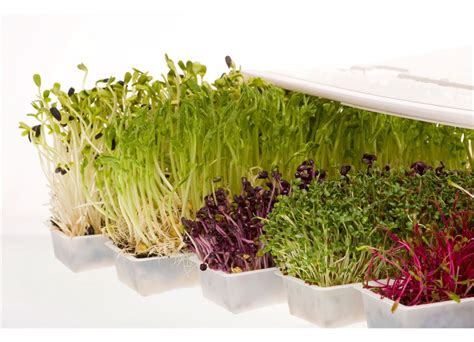 easy grow wheatgrass easygreen automatic sprouter deluxe at uk juicers