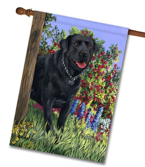 labrador dog house labrador retriever house flags dog life photo