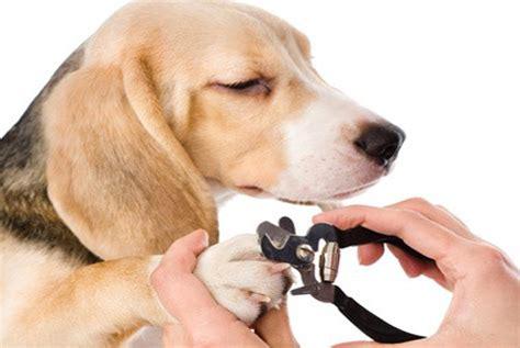 prix pour couper les ongles d un chien coupe ongle et griffes chien accessoires pour chien