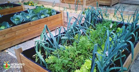 benefits of raised garden beds 18 benefits of raised bed gardening you may have never