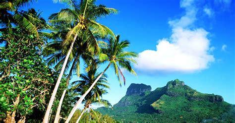 wallpaper pohon kelapa  pantai