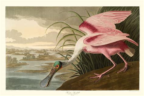 audubon birds grosvenor rare book room