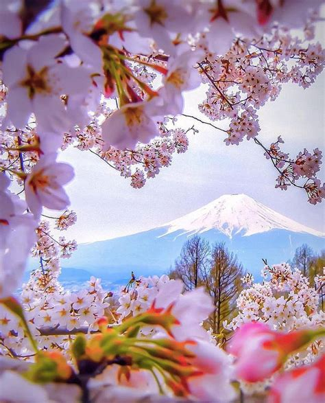 lovely like blossom cute gt 1000 images about beautiful japan 美しい日本 on pinterest