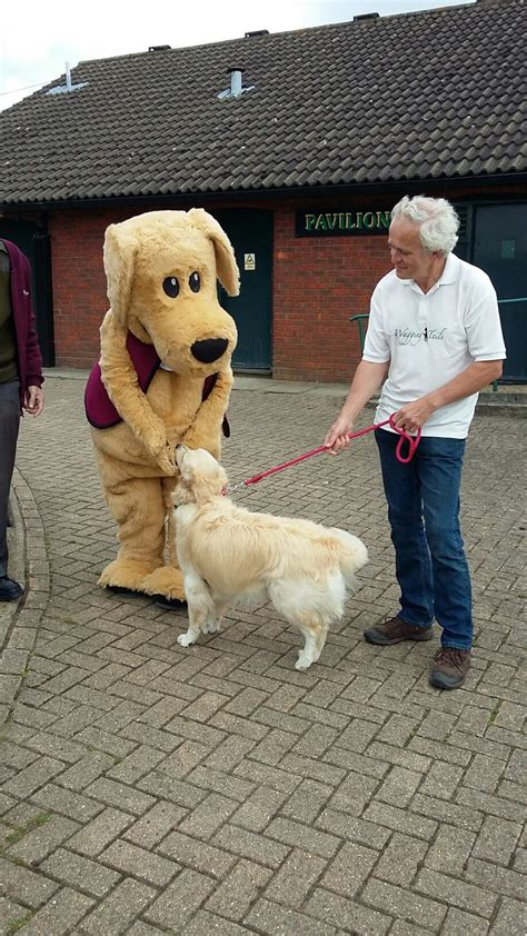 golden retriever rehoming golden retriever rehoming hertfordshire dogs our friends photo