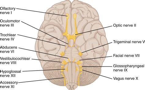 Cranial nerves 1 12