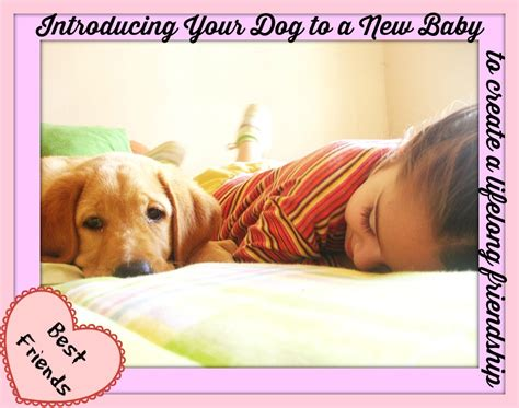 how to introduce your dog to a new house introducing your dog to a new baby
