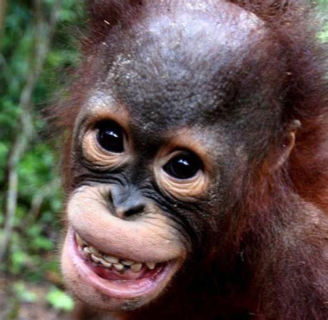 Bewerbungsfoto Lacheln Oder Nicht Tierisch Witzig Lachen Ist Keine Rein Menschliche Geste