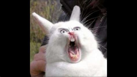 Angry Bunny Meme - angry rabbit piktas kiskis youtube