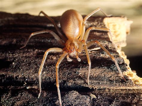 cost to build a house in missouri brown recluse spider infestation costs missouri couple