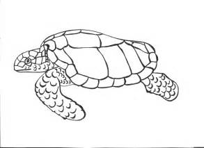 color of turtles free printable turtle coloring pages for