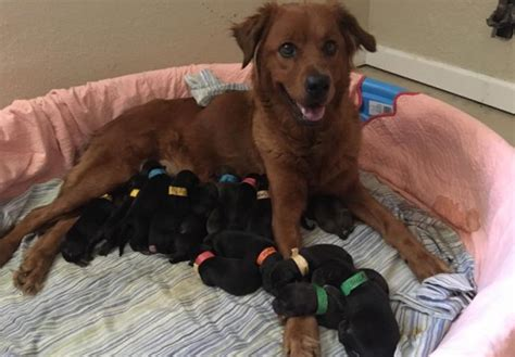 my gave birth to a dead puppy compassionate saves 19 dogs from certain animals pets
