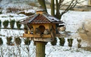 vogel haus datei vogelhaus jpg